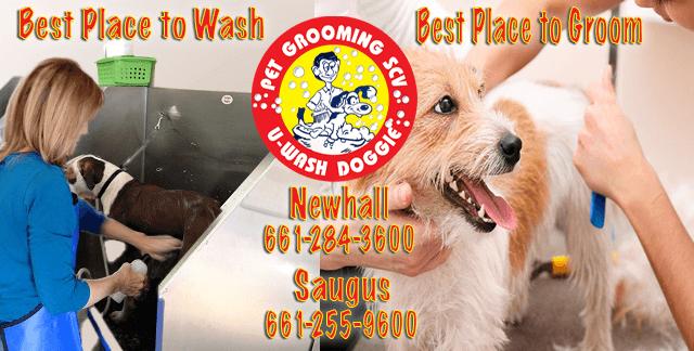 U-WASH DOGGIE – Professional Pet Groomer of Santa Clarita