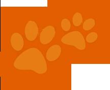 Self-serve dog wash SCV | U-Wash Doggie | Dogs and Cats!
