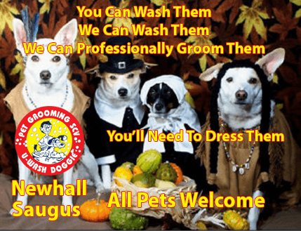 Full Service Professional Pet Grooming at U-Wash Doggie, Newhall and Saugus