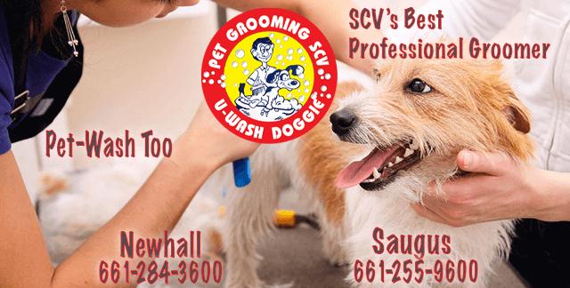 Best Professional Pet Groomers – U-Wash Doggie Newhall    U-Wash Doggie Saugus