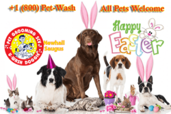 U-Wash Doggie ® Professional Pet Grooming SCV – Closed Easter Sunday