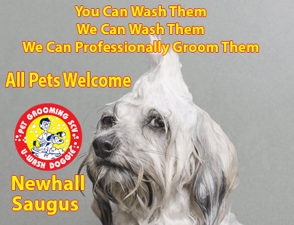 Diy do it yourself professional pet grooming u wash doggie diy do it yourself professional pet grooming u wash doggie santa clarita solutioingenieria Images