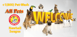 U-Wash Doggie Grooming Pickup and Drop Off , Valencia, Newhall