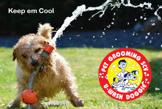 Beating the Summer Heat | U Wash Doggie