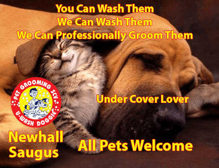 Why wait for Valentines Day… Call U-Wash Doggie – For a Heartfelt Grooming