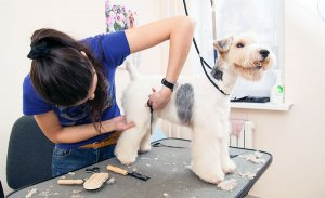 Newhall U-Wash Doggie SCV – Show your Pets the Love They Deserve!